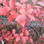 紅葉(90度右)